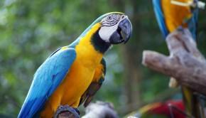 Malacca-Zoo